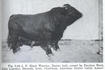 J. F. Black Warrior